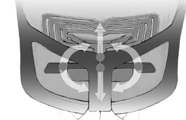 A sustentação pélvica passiva gira a pelve para a frente para manter a forma natural da espinha.